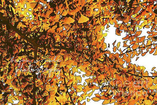 Ginko Tree Sacramento by Bryan Cole Photography