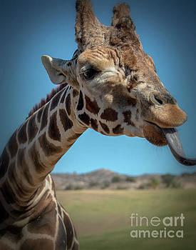 Giraffe - 8225b by Debra Kewley