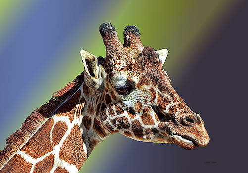 Giraffe colorful bsckground by Cathy Harper