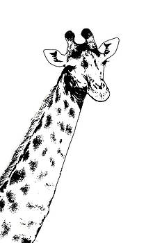 Giraffe In Black and White by Ramona Murdock