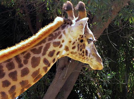 Giraffe by Lea Cox