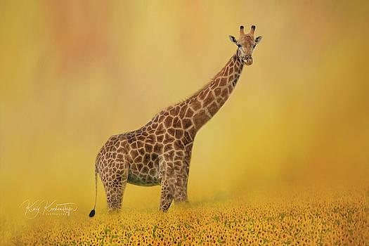 Giraffe Walking Through Field of Sunflowers by Kay Kochenderfer