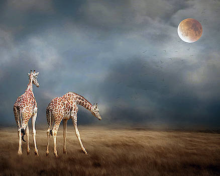Giraffes by Rebecca Cozart