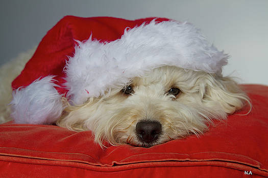 Gizmo The Santa Pup by Nikki Attree