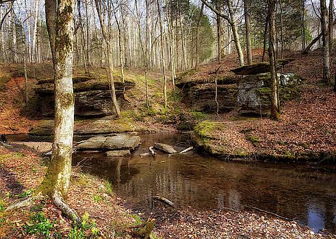 Glenrock Branch by Susan Rissi Tregoning