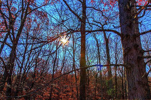 Glowing Leaves by Doug Camara