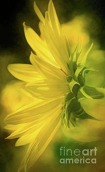 Glowing Sunflower by Mellissa Ray