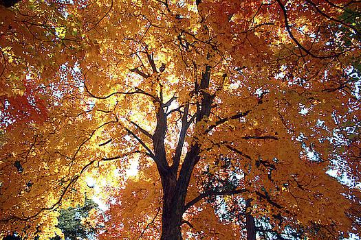 Glowing Tree by Ellen Tully