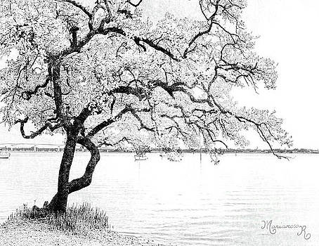 Gnarled in Black and White by Mariarosa Rockefeller