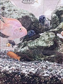 Go fish by Devorah Malek