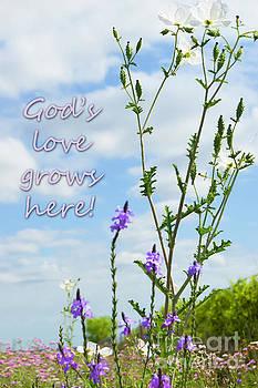 Gods Love Grows Here by Leticia Latocki