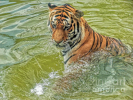 Going for a swim by Leigh Kemp