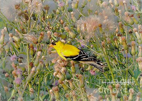 Gold Among The Milkweed by Tami Quigley
