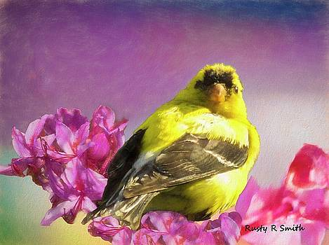 Gold Finch in Honeysuckle blossoms.blossoms. by Rusty R Smith