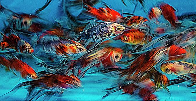 Gold Fish Abstract by John Rodrigues