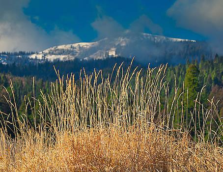 Gold Grass Snowy Peak by Tom Gresham