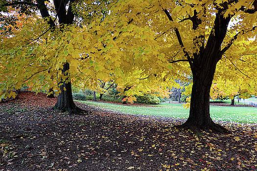 Gold Leaf on a Tree by Cornelis Verwaal