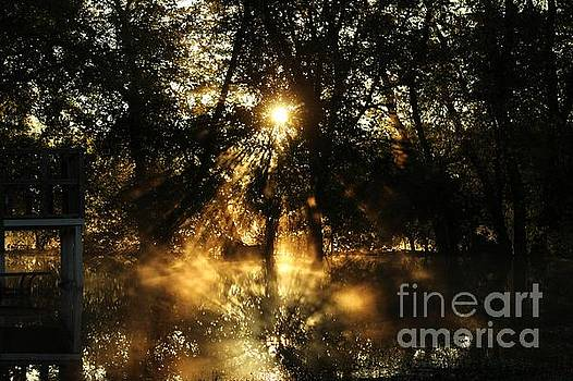 Gold Lining by Denise Irving
