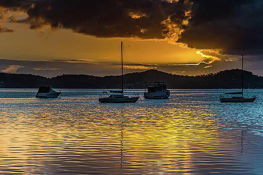 Gold on the Bay by Merrillie Redden