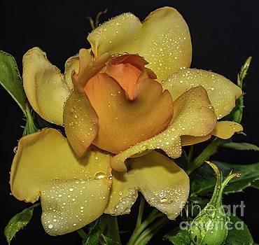 Gold Struck's Exceptional Beauty by Cindy Treger