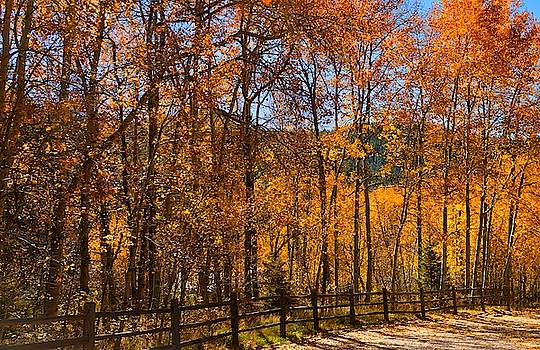 Golden Aspens by Stephen Anderson