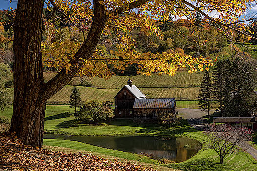 Golden Autumn in Vermont 2018 by Terry DeLuco