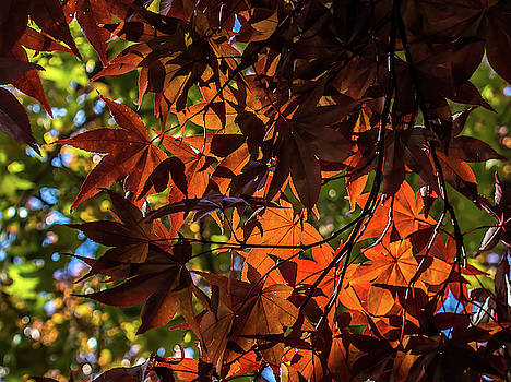 Golden Autumn by Kevin Myron