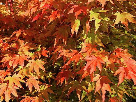 Golden Autumn by Nik Watt