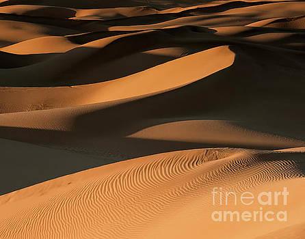 Golden Dunes by Jennifer Magallon