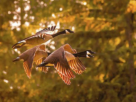 Golden Flight by Joy McAdams