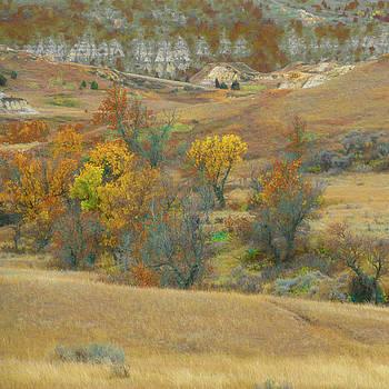 Golden Grasslands of West Dakota by Cris Fulton