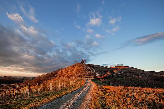 Golden hill by Davor Zerjav