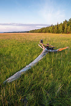 Golden Hour Driftwood by Tim Newton