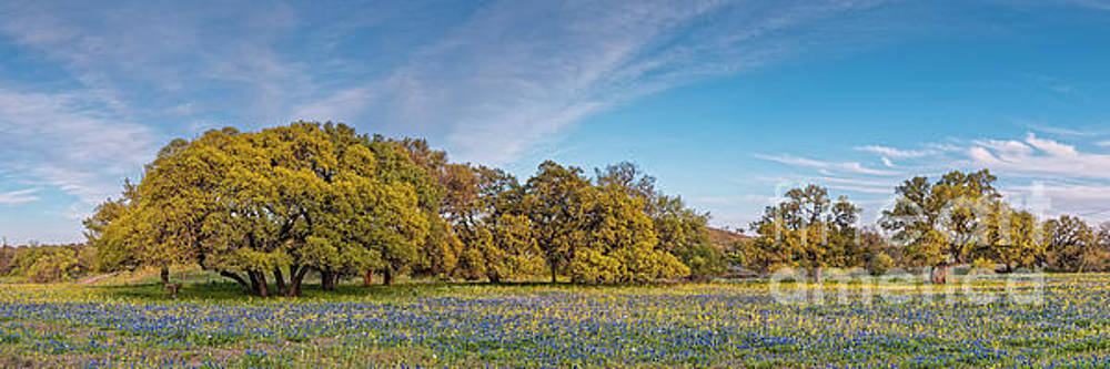 Golden Hour Light Bathing Oaks and Bluebonnets Fields - Willow City Loop Texas Hill Country by Silvio Ligutti