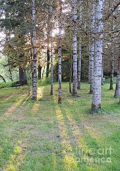 Golden Light Through the Trees by Julie Rauscher