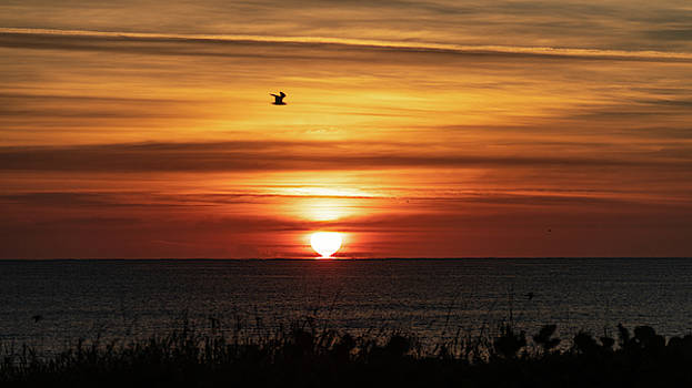 Golden Seagull Sunrise Delray Beach by Lawrence S Richardson Jr
