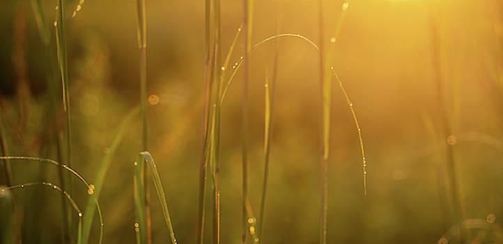 Golden Sunrise Prairie by Steve Gadomski
