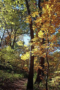 Golden Trail by Ellen Tully