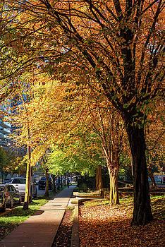 Ross G Strachan - Golden Trees