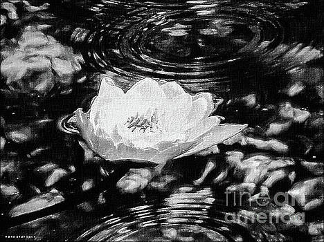 Golden Water Lily Pond Ripples BW by Mona Stut