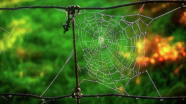 Golden Web by Bryan Smith