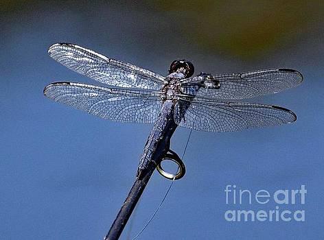 Cindy Treger - Gone Fishing - Blue Dasher Dragonfly