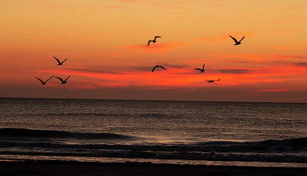 Good Morning New Jersey by Sharon Mayhak