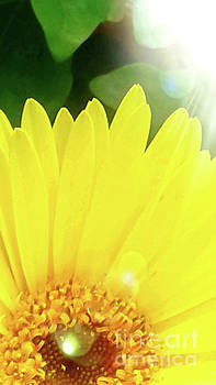 Good Morning Sunshine by Gardening Perfection
