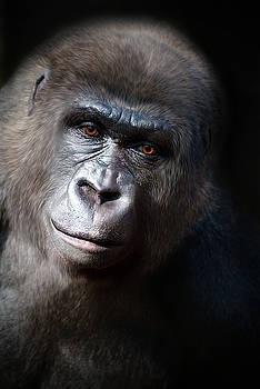 Gorilla face  by Savannah Gibbs