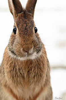 Got Carrots? by Trina Ansel