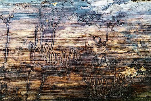 Graffiti in the Wild by Tom Romeo