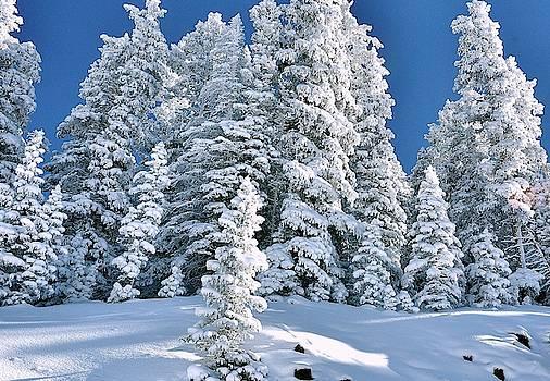 Grand Msa Colorado frost by Gerald Blaine