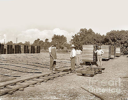 California Views Archives Mr Pat Hathaway Archives - Grape drying, Visalia, Circa 1910