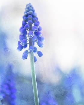 Grape Hyacinth 2 by Rebecca Cozart
